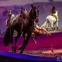 cavalluna-arena-nuernberg-8-2-2020_0024