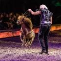 cavalluna-arena-nuernberg-16-2-2019_0017