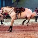 cavalluna-arena-nuernberg-16-2-2019_0027