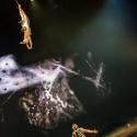 cirque-du-soleil-arena-nuernberg-6-12-2017_0030