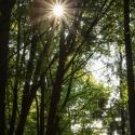 druidenhain-09-2012-27