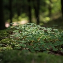 druidenhain-09-2012-31