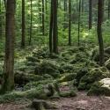 druidenhain-09-2012-36