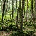 druidenhain-09-2012-37