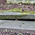 wien-vienna-2012-st-marxer-friedhof-29